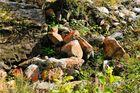 Rote Felsen am Chärstelenbach, Maderanertal