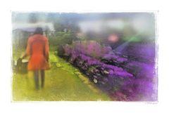- rote Frau im Lavendel-Feld -