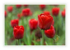 rote Frühlingstupfen