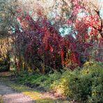 Rote Herbstbätter am Mulde-Ufer in Dessau-Rosslau