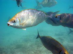 rote Lippen - Kanifinolhu - Malediven