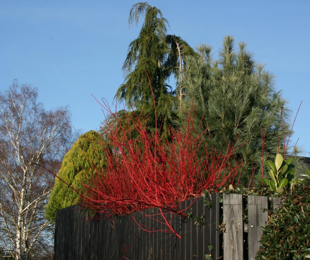 rote Natur