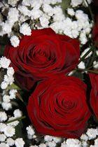 Rote Rosen als Zeichen der Liebe