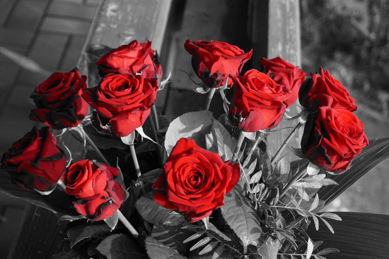 rote rosen im schwarz wei foto bild schwarz rose rote bilder auf fotocommunity. Black Bedroom Furniture Sets. Home Design Ideas