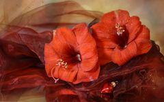 rote Schönheiten