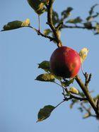 Roter Apfel im Herbstlicht
