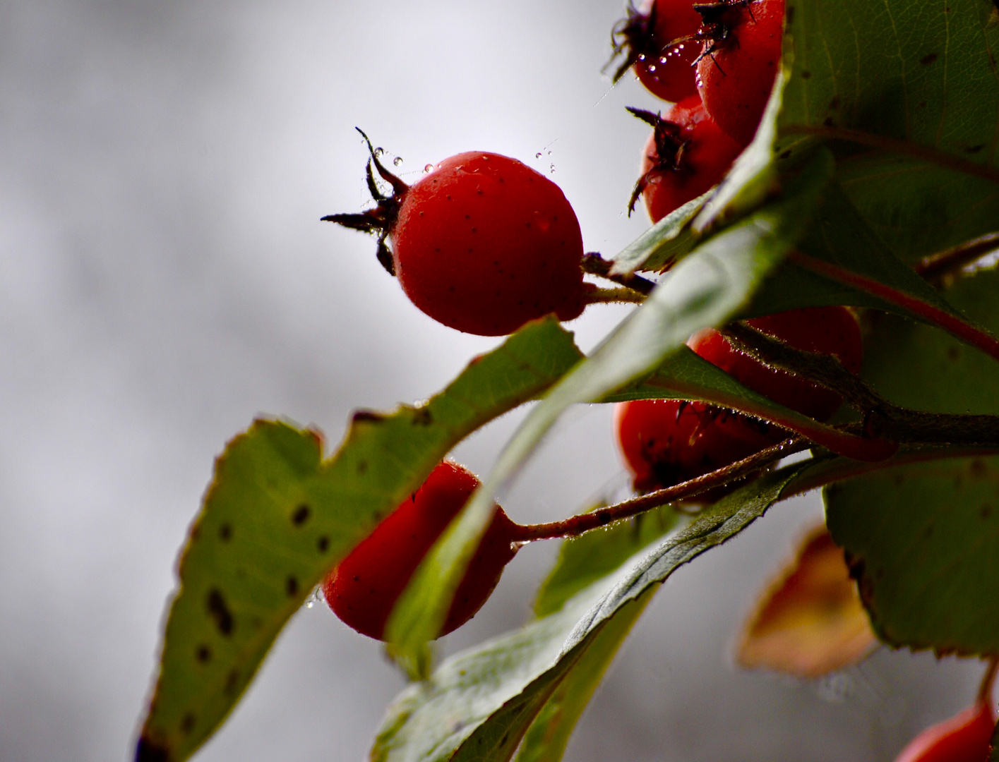 Roter Ball 3