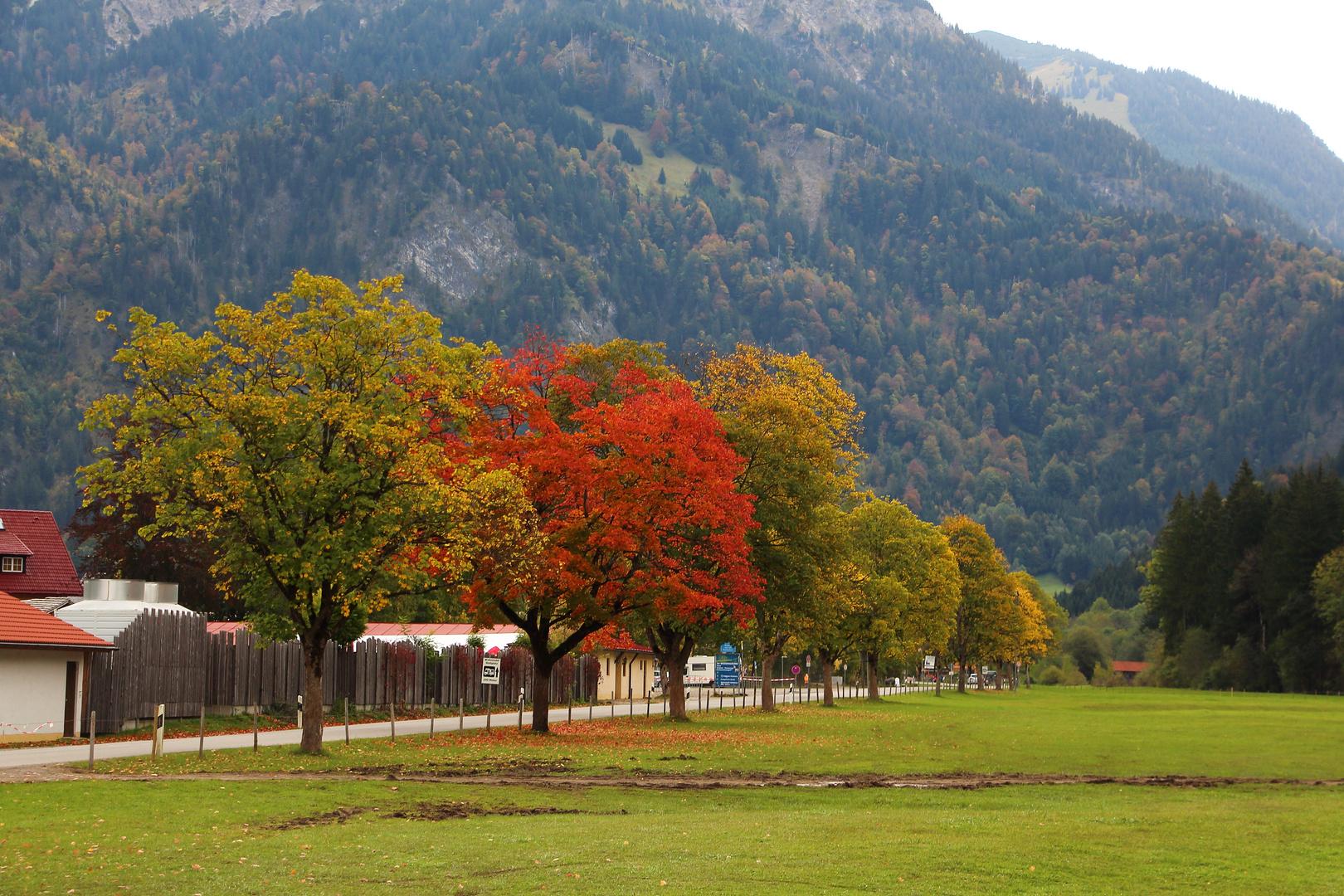 Roter Baum neben grünen