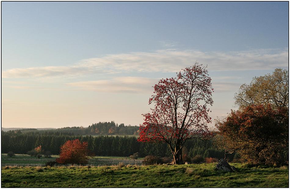 roter Baum und ohne Kühe ;-)