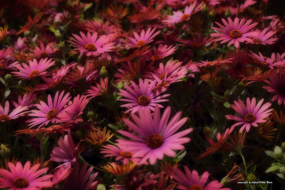Roter Blütenstrauch