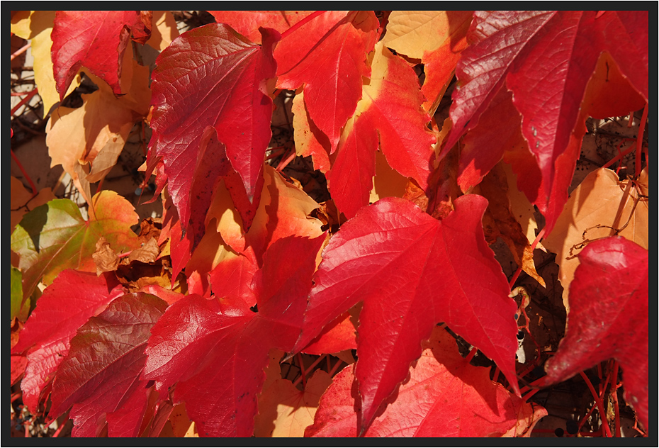 Roter Herbst