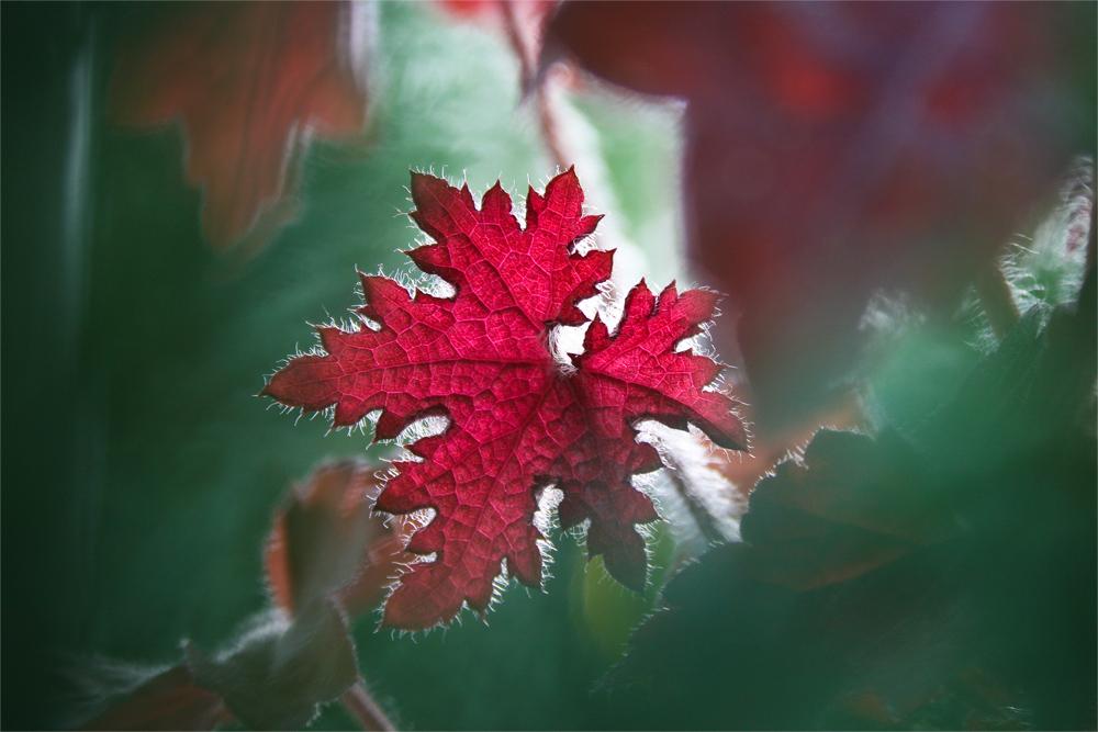 Roter Herbstzauber in Grün gehüllt