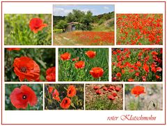 roter Mohn......