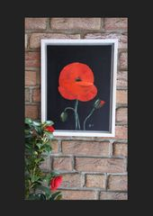 Roter Mohn 2015