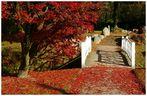 Roter Teppich vom goldenen Oktober........