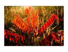 Roter und Goldener Oktober an der Kiesgrube...