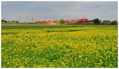 Roter Zug in gelb grüner Landschaft...