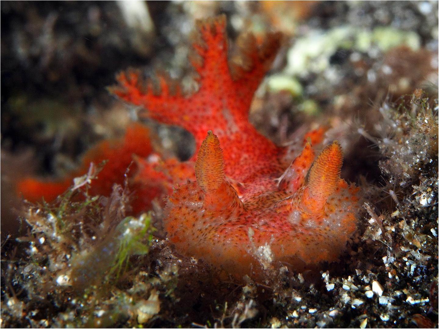 Rotes Schnuckelchen Foto & Bild | europe, canary islands