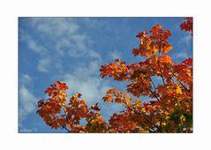 Rotgoldener Oktober