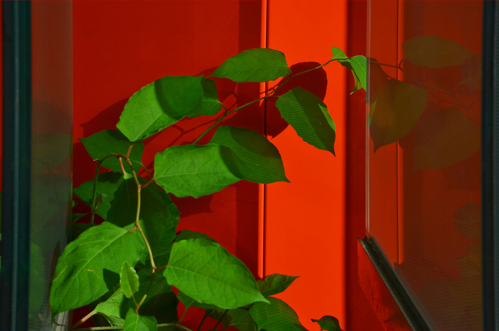 rotgrün