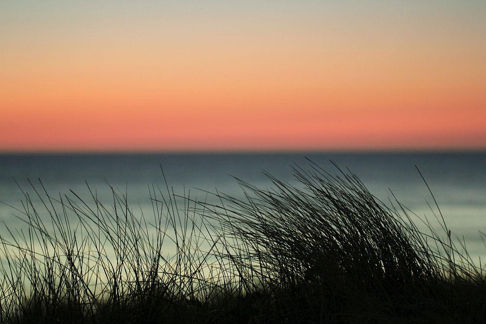 Rothko mit Strandhafer