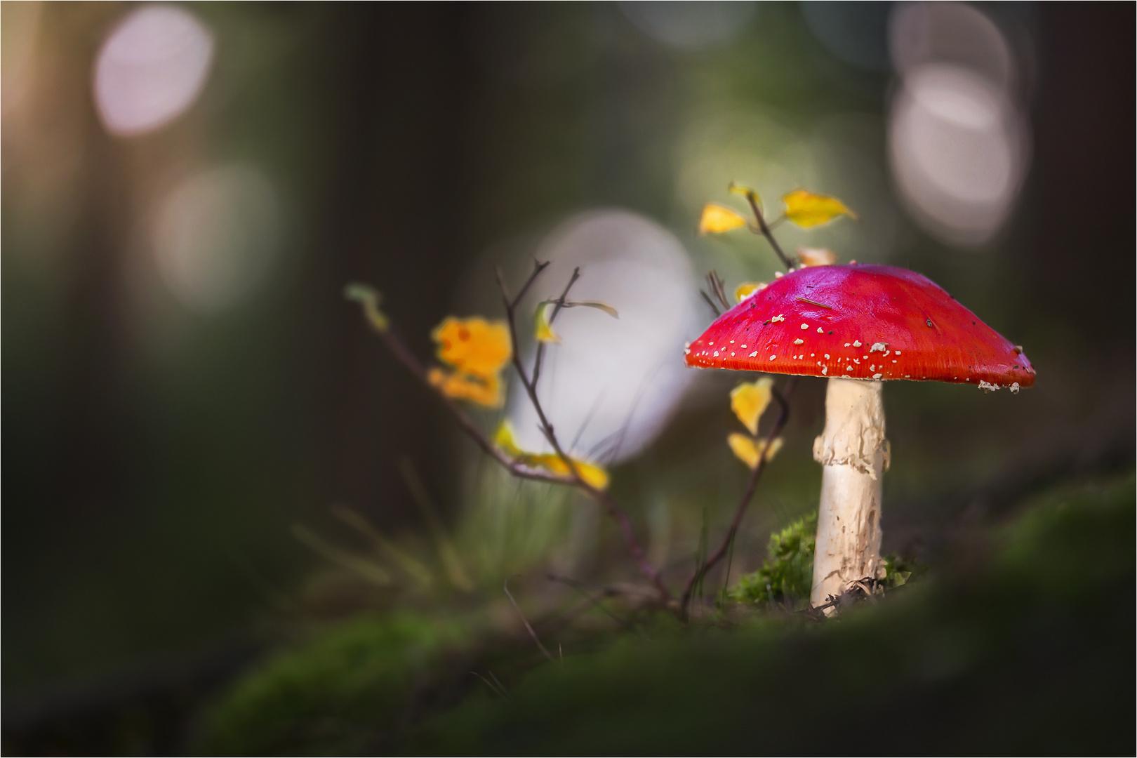 """""""Rotkäppchen"""" allein im Wald"""