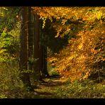 Rotkäppchens Weg... (Märchenwald Solling)