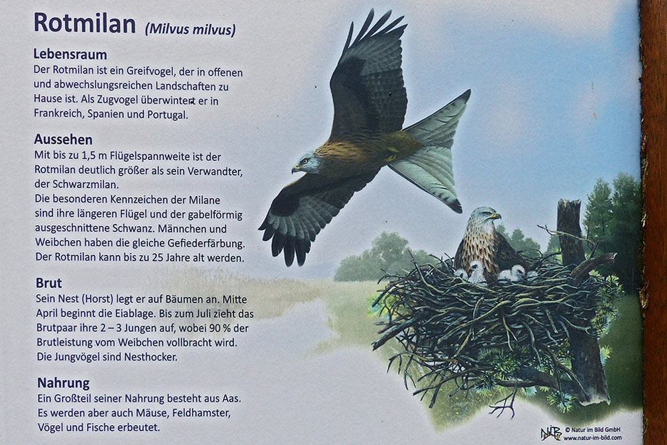 Rotmilan - Falknerei Remscheid