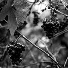 rotwein...