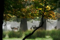 Rotwild im Nebel