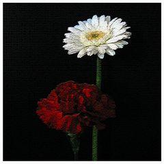 :: rouge et blanc ::