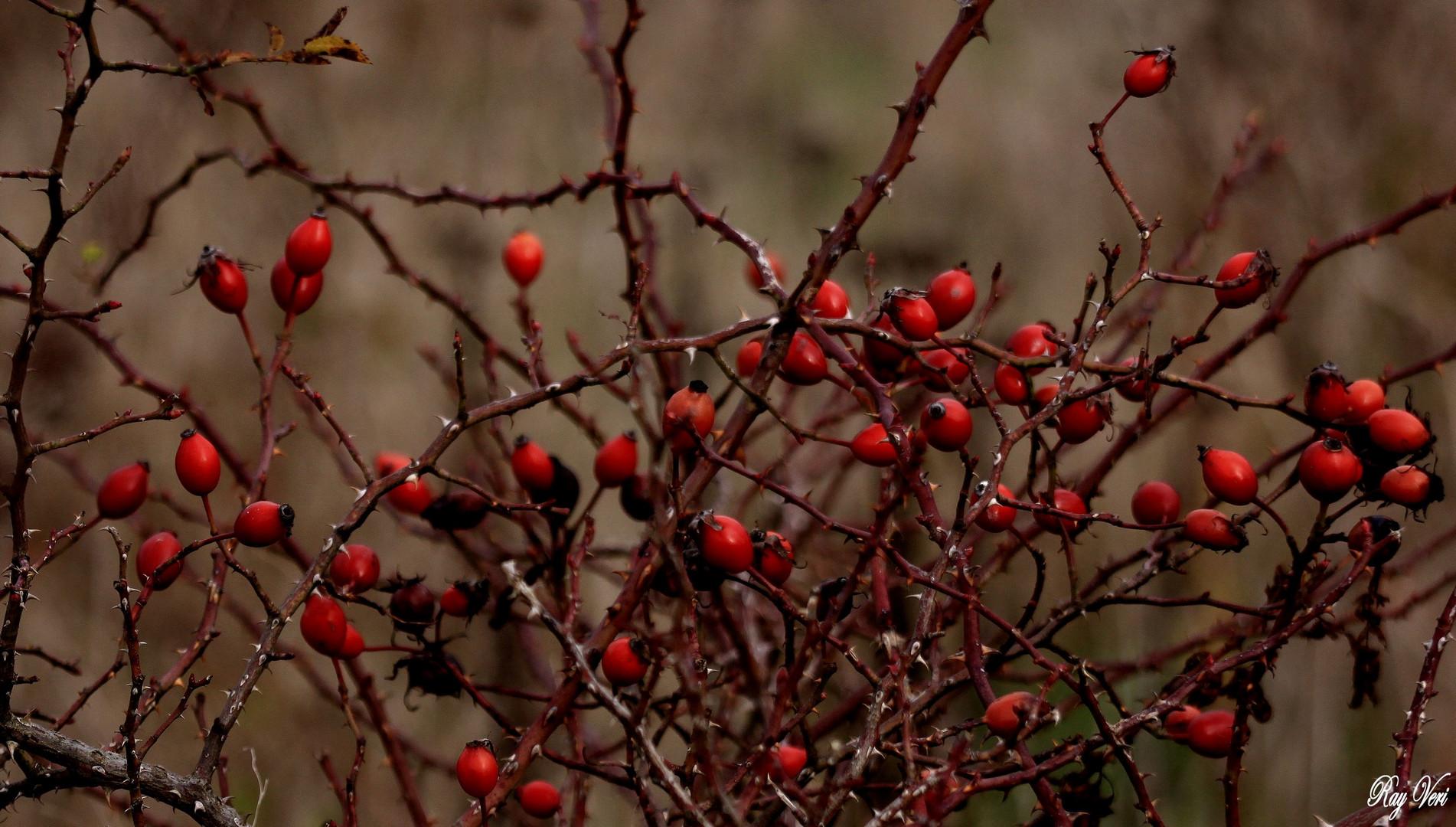 Rouge Piquant