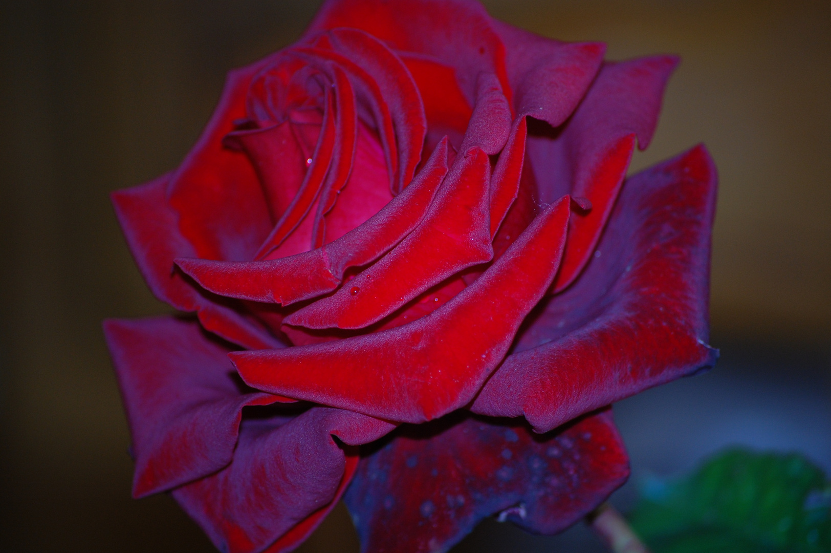 rouge pourpre