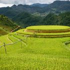 Rounded rice field