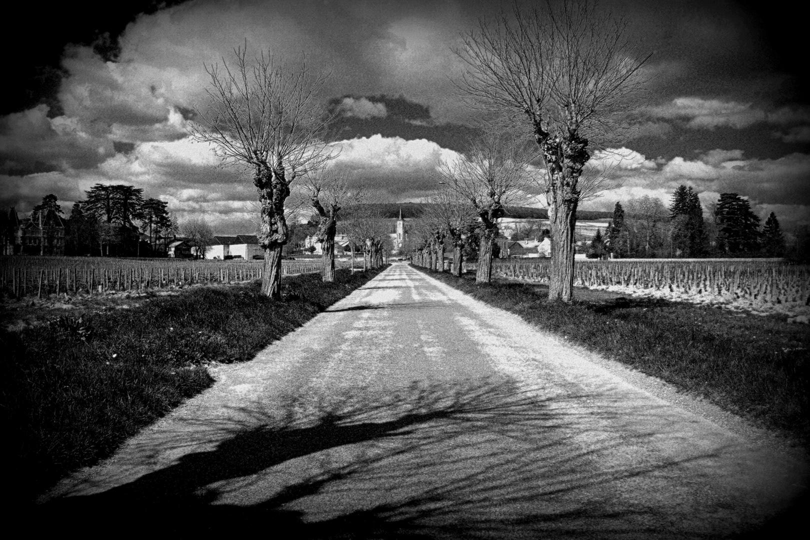 Route des Grands Crus / Bourgogne