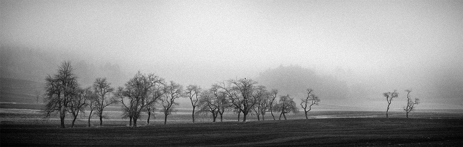 ROW OF TREES [02]