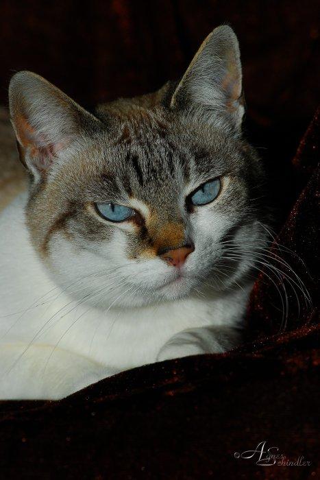 Roxy, Anubis` Tochter