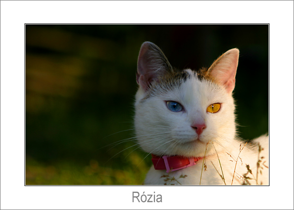 Rózia