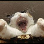 *RRRRRROARRR* ...ich bin ein Tiger und habe dich zum Fressen gern ;o)
