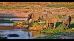 Ruaha Elephants...