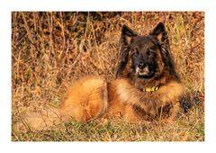 Ruby, unsere 12-jährige Hundedame