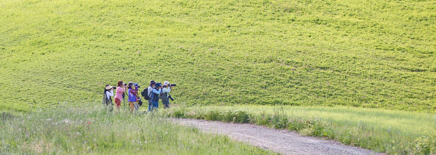 Rudel-Fotografieren im Val de Orcia