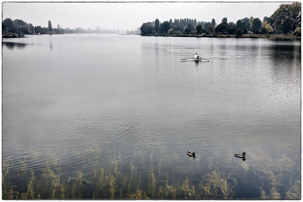 Ruderer an der Alten Donau