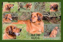 RUDI 2