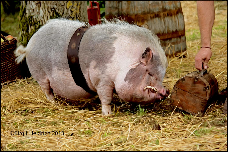 Rudi das kluge Schwein !