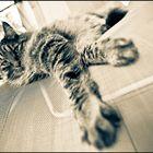 Rudi The Cat
