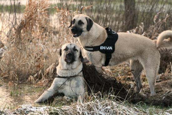 Rudi und Kaya
