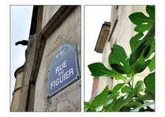 Rue du Figuier