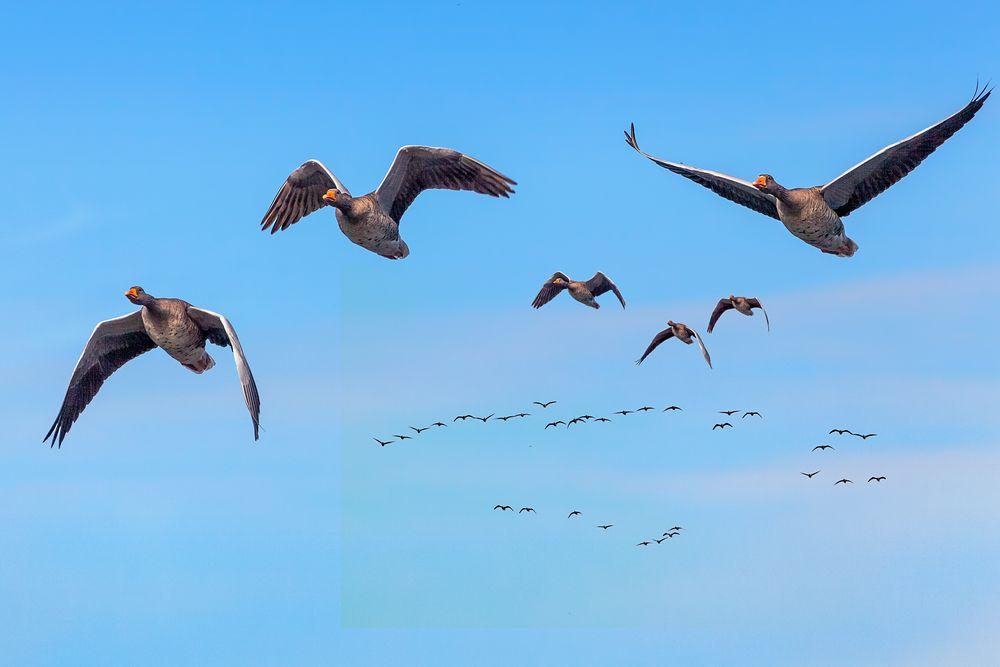 Rückkehr der Zugvögel
