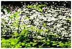 Rümpfwaldsommer (9)